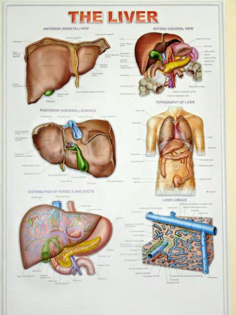 biology chart