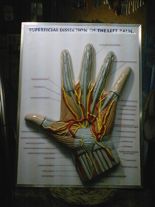 Dissection Model