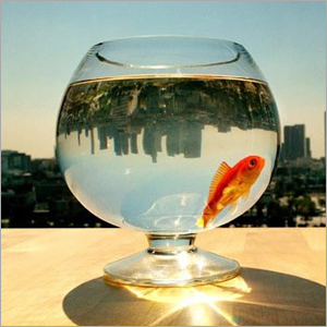 Glass Fish Bowls