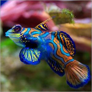 Marine Aquarium Fishes