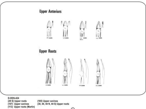 Upper Anteriors and Upper Roots