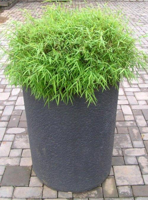 Fiber Glass Urn Planter