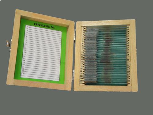 SLIDE BOX OF 50 SLIDES