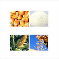 Maize Starch And Its Allied Products