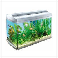 Designer Glass Aquarium