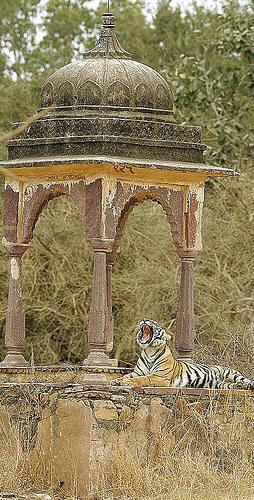 DELHI- Jaipur- Ranthambhore - Sariska - Agra