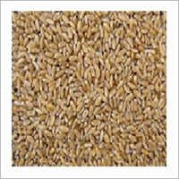 Wheat Bhaliya