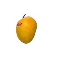 Export Grade Alphonso Mango