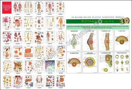 3D Biological Charts