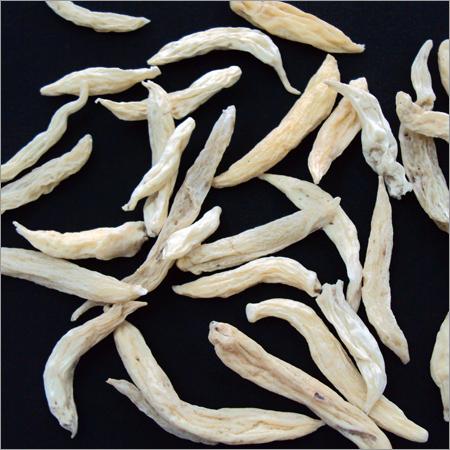 Chlorophytum Tuberosum Herbs