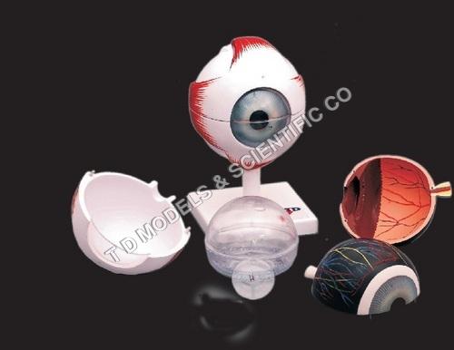 Human Eye Model Kit
