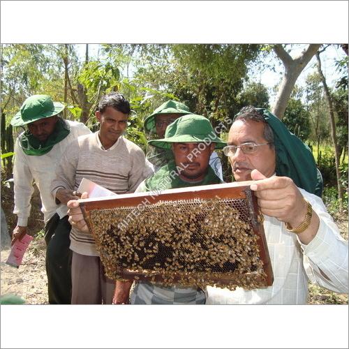 Beekeeping Traning