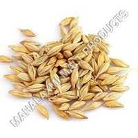 Barley Malt Grain