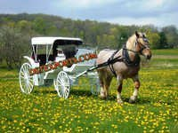Spring Victoria Horse Carriages