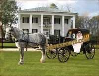 Black Beauty Wedding Carriage