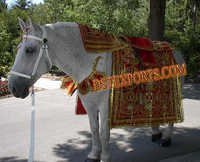 Wedding Horse Costume