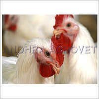 Ani-Pro Protein Supplement For Poultry Feed