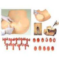 Gynecological Examination Model ( BEP/F30S )