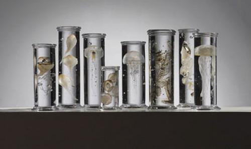 Glass Jar For Musim Specimen