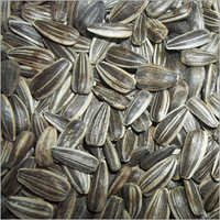 Stripped Sunflower Seed