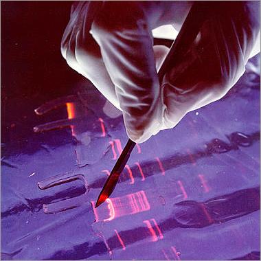 PCR Virus Testing