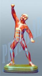 Muscle Figure Model
