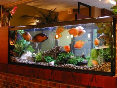 Hotels Fish Aquarium