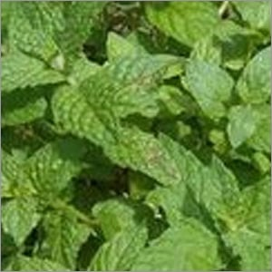 Dehydrated Mint