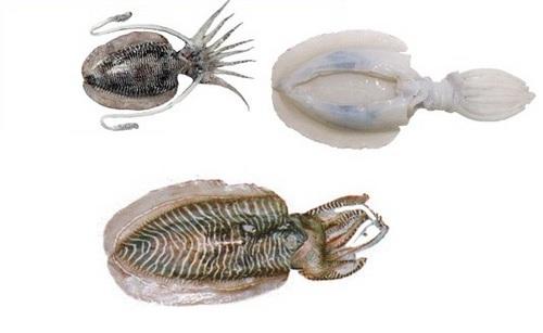 Cuttlefish Seafood Fish