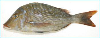 Emperor Seafood Fish