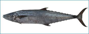 King Fish Seafood