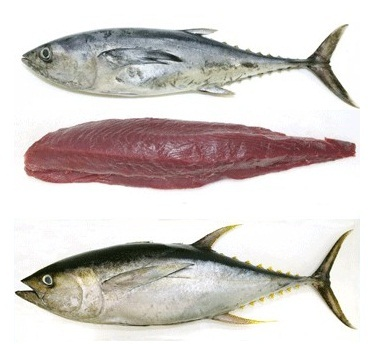 Yellow Fin Seafood Fish