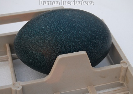 Emu Eggs Setting Tray