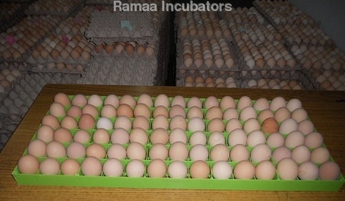 Egg Setting Trays