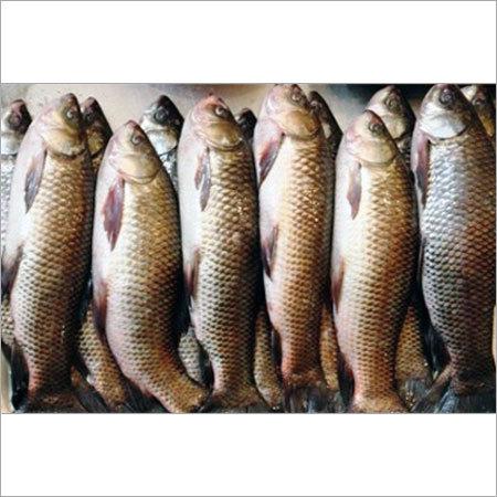 Indian Fish