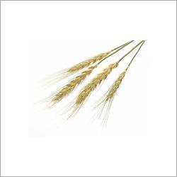 Aromatic Par Boiled Rice