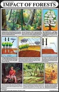 Impacts of Forests Chart