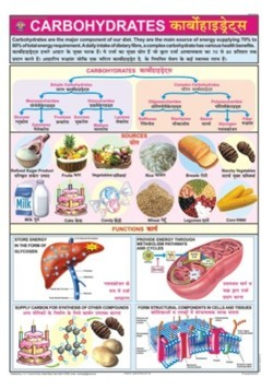 Carbohydrates Chart