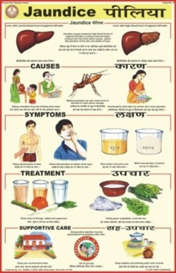 Prevent Diseases Charts