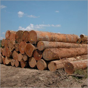 Malaysian Hardwood Logs