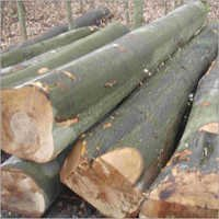 Beech Wood Logs