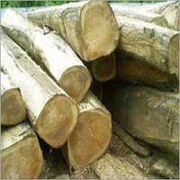Sal Wood Logs