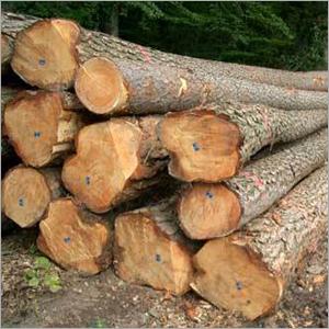 New Zealand Pine Wood Logs