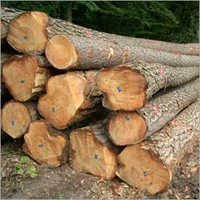 New Zealand Pine Wood Logs