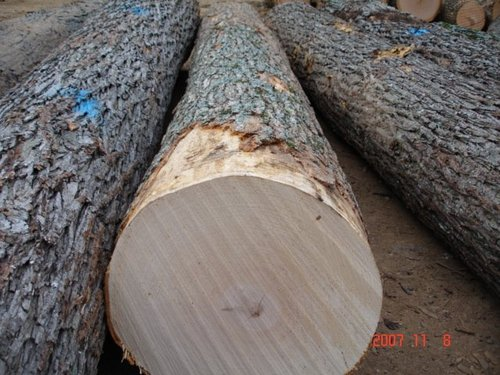 Maple Wood Logs