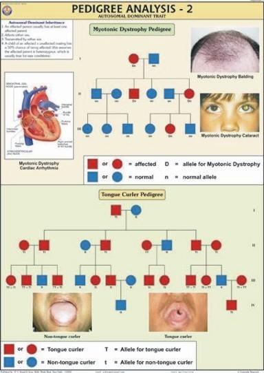 Genetics & Evolution Charts