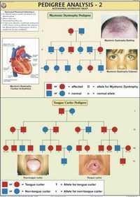 Pedigree Analysis -2 Chart