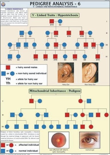 Pedigree Analysis-6 Chart