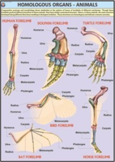 Animals Homologous Organs Chart
