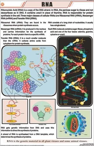 RNA Charts